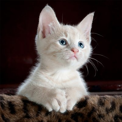 Les chats et les chatons